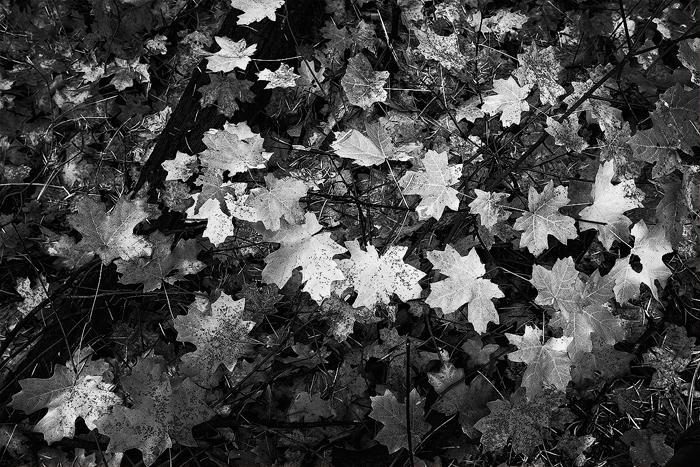 West Fork, Oak Creek, Sedona, Arizona, forest, maples