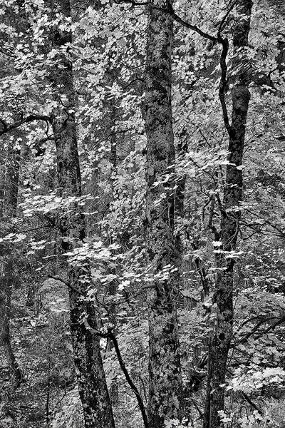 canyon, trees