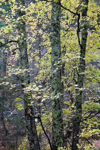 West Fork, Oak Creek, Sedona, Arizona, canyon, trees